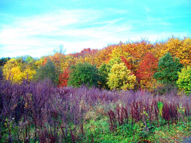 640 x 480 jpeg 235kB, Herbstferien Nrw 2015 | Search Results ...
